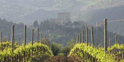 Da Firenze: Full Day-Tuscan Wine Tour con pranzo