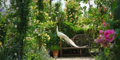 Padova: Orto Botanico e farfalla Paradise Tour