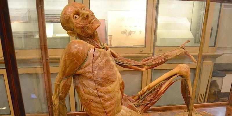Anatomy Museum - Pavia | ZonzoFox