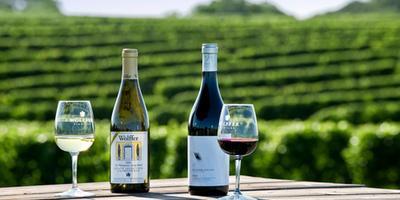 Half-Day Wine Tasting in the Veneto