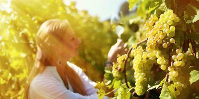 Valdobbiadene Prosecco Wine Tasting Tour from Verona