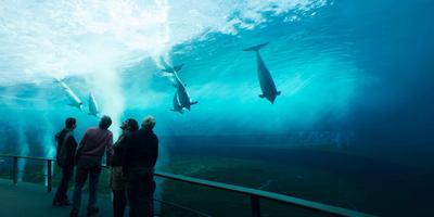 Genoa Aquarium Full-Day Entrance Ticket