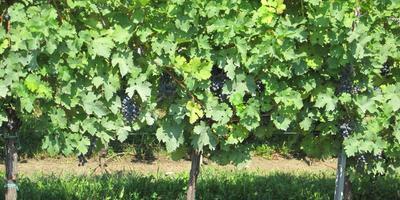 Collio Wine Tasting Tour from Venice or Padova