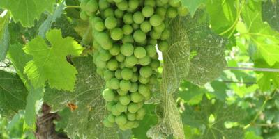 Soave Wine Tasting Tours from Venice, Verona or Padova