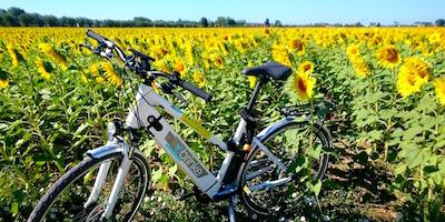 Noleggio bici, e-bike e Tour